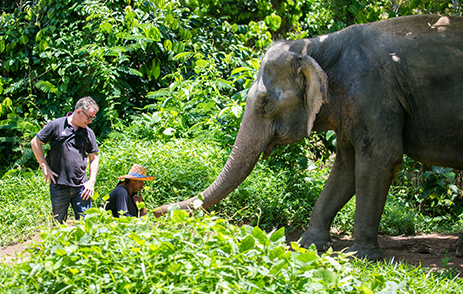 Elephant being fed in a Thailand sanctuary
