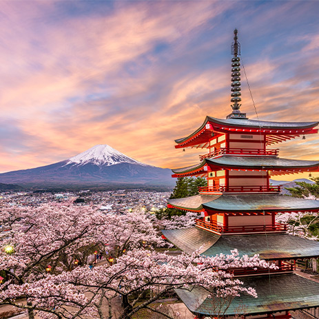 Cherry blossom season in Japan with Mount Fuji in the distance